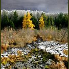 A Golden Moment - Larch Bog Mindscape by Wayne King
