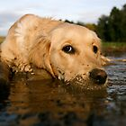 Dog plus mud equals bliss by Alastair Humphreys