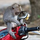 The Monkey in the mirror by Anne Young