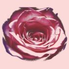 Broken rose by Tanja Katharina Klesse