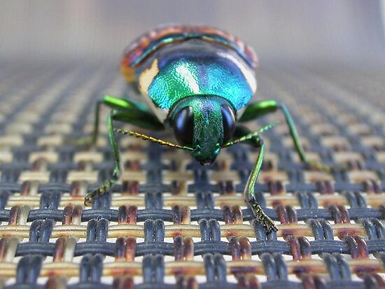 Green Beetle by TeAnne