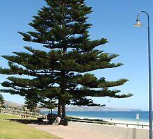 Pine Coast by ScenerybyDesign