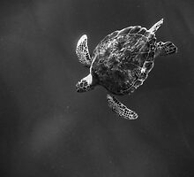 Dive by Greg Riegler