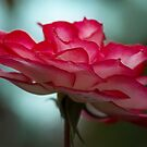 Petal Power in Pink by Dianne English