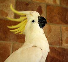 Crest up, birds! by Sarah Cole