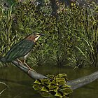 Green Heron by Walter Colvin