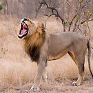 The Lion&#x27;s Roar by Erik Schlogl