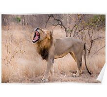 The Lion's Roar Poster