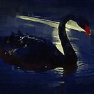 Black Swan at Twilight by Sandra Chung