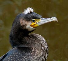 Cormorant IV by Tom Newman