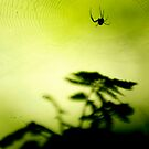 weave me a web by sara montour