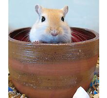 Tao the potty gerbil by shiro
