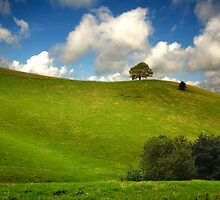 One Tree Hill by Nigel Finn
