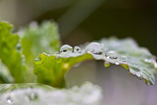Balls of water by Richard Keech