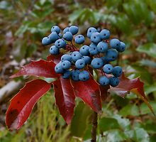Blueberries by David Galson