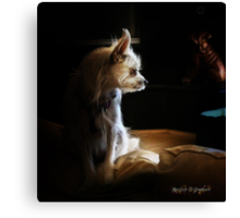 Contemplations of the Princess Canvas Print