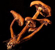 old drying Mushrooms by Jeffrey  Sinnock