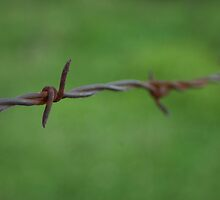Old Metal Rusty Barbwire Fence by PhotoCrazy6