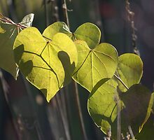 Backlit green heart leaf - Conner Prairie by Artophobe