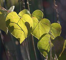 Backlit green heart leaf - Conner Prairie by Artophobe