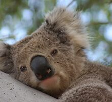 Beary Cute by Fiona Kersey
