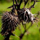 wild straw berries by Bronwen Hyde