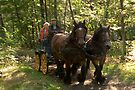 Full speed ride with draft horses and carriage  by steppeland