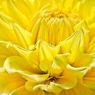 Good Morning Star Shine by Marilyn Cornwell