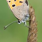 butterfly, profileshot by janko