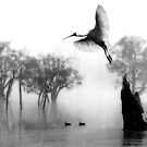 &quot; Spoonbill Landing&quot; by Mike Larder