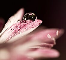 Beauty within a Drop by Lori411