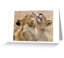 Lionesses Grooming Greeting Card