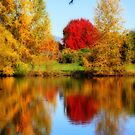 Fall Colors in Eugene by Chappy