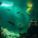 Underwater World by Equinox