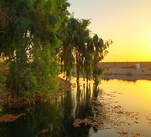 Morning Light - Baghdad Sunrise by Tom  Garrason
