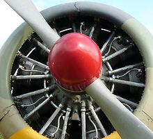 Harvard Radial Wasp  by Woodie