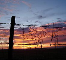 Fence Framed Dawn by emilycolors