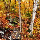 Autumnal Brook by Nancy Barrett