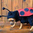 Lady Bug by Merilyn