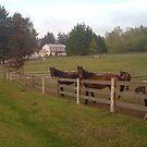On the Farm by Merilyn