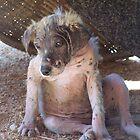 Dog in Thailand by wheelyawheely