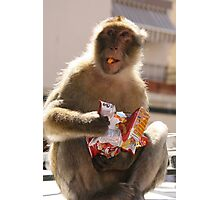 Thieving monkey. Photographic Print