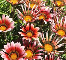 Daisies (3063) by ScenerybyDesign