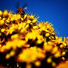 Yellow Bee Blue by Philip Werner