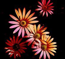 More Bloomin' Flowers by Nigel Finn