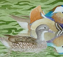 Mandarin Ducks on a lake by aquartistic