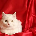White cat in red by Annbjørg  Næss