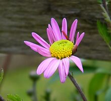 Flower along a wooden fence by PASpencer