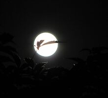Full Moon by Hans Bax