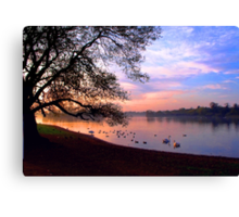 Watching the Swans - 1 Canvas Print